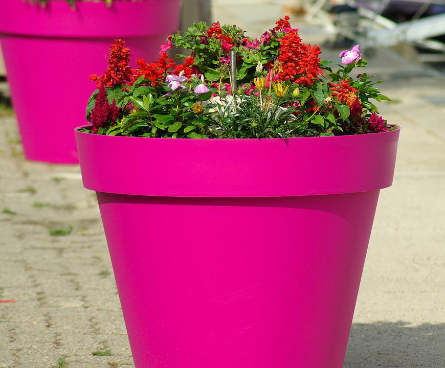 Flower pot flowers in pots free photo on pixabay flower pot flowers flowers in pots decoration mightylinksfo