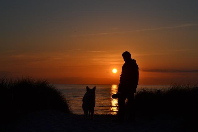 Free Photo Sunset Sea Beach Dog And Man Free Image