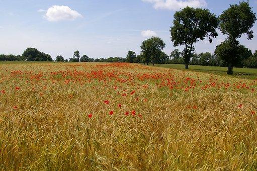 Barley, Fields, Nature, Field, Landscape