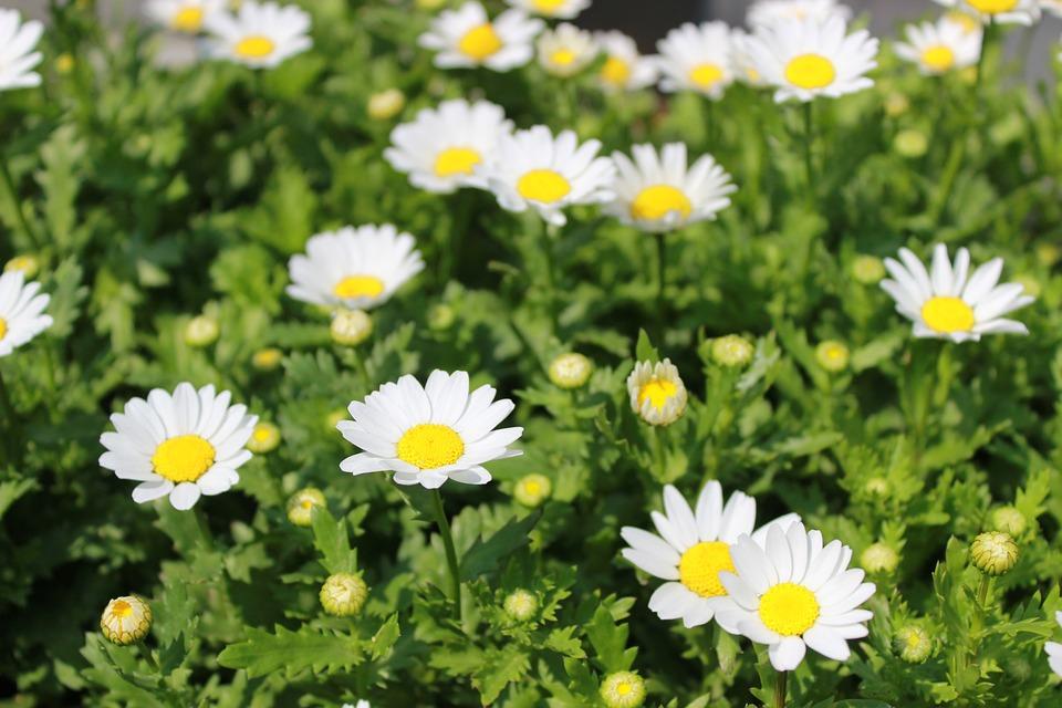 Fotos de flores blancas 43