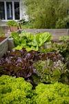 Urban Gardening, From PixabayPhotos