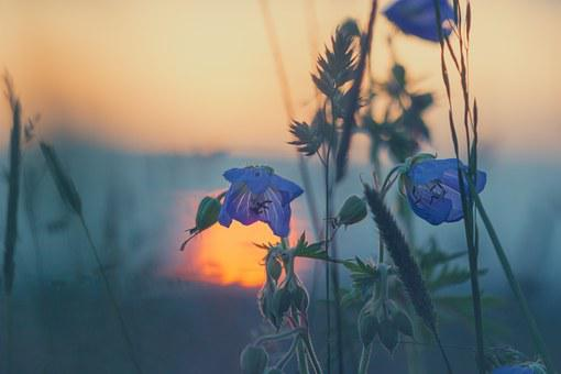 Meadow, Sunset, Nature, Blade Of Grass