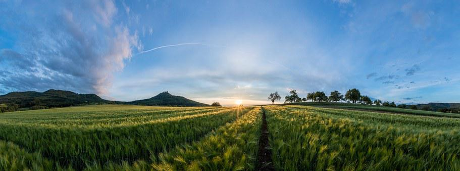Field, Landscape, Sunset, Summer, Nature