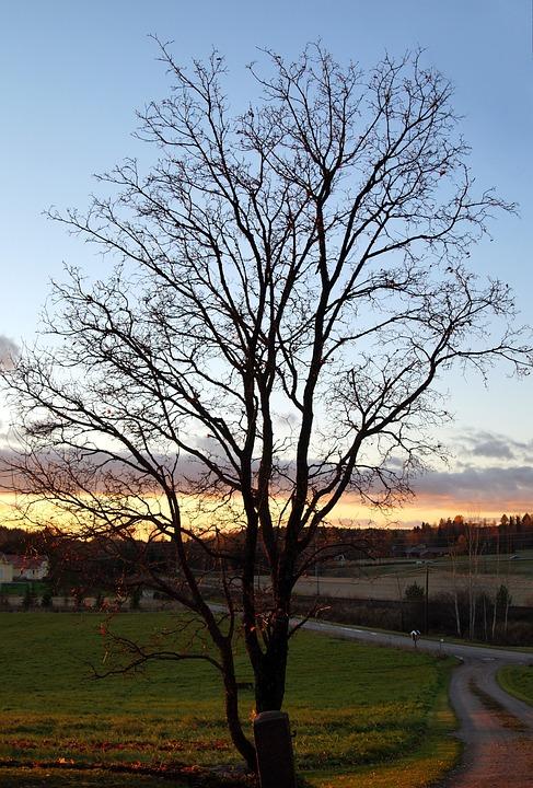automne arbre sans feuilles finlande paysage - Arbre Sans Feuille