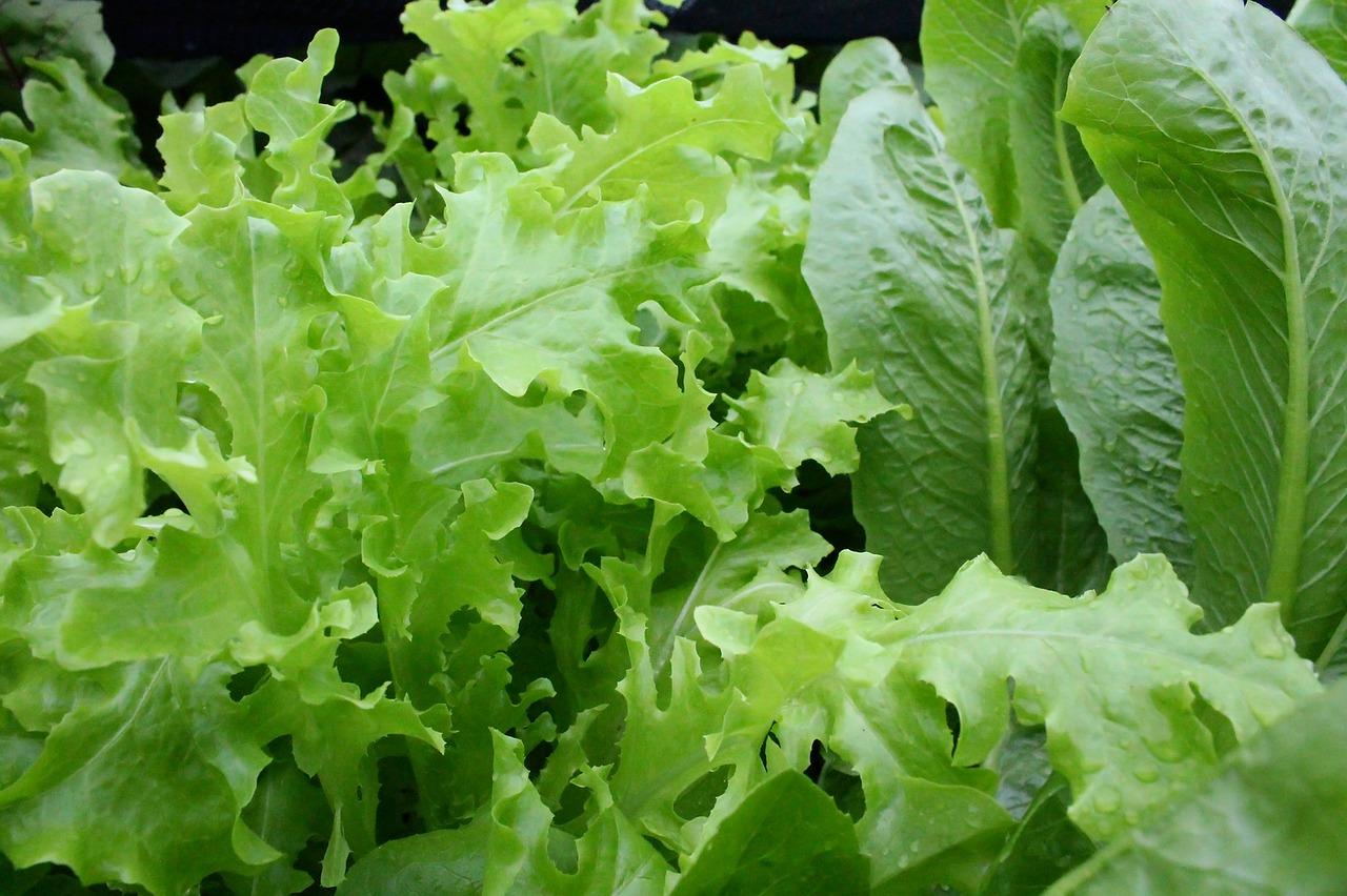 каталоге виды листьев салата с названием оригами бумаги одна