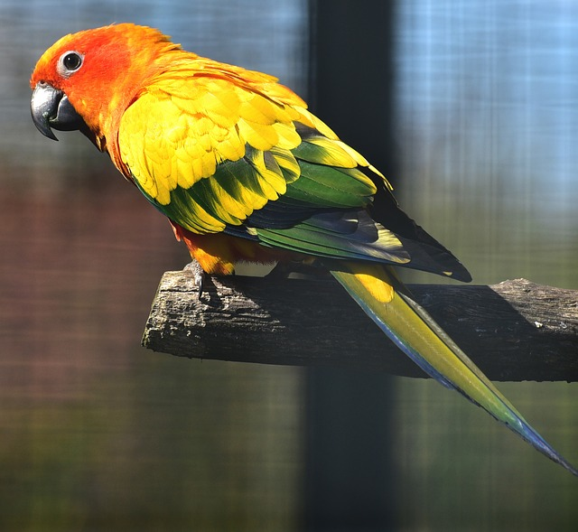 free photo parrots aras colorful color free image on