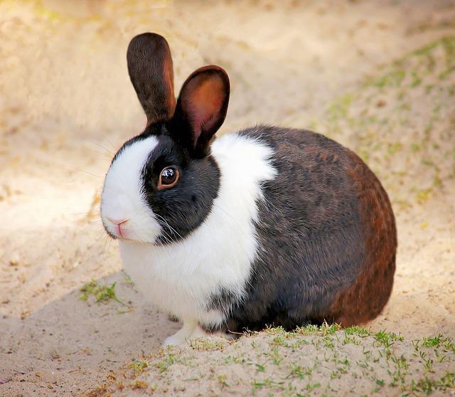 free photo  rabbit  pet  small animal  animal - free image on pixabay