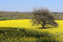 free photo: fleurs rouges, fleurs jaunes - free image on pixabay