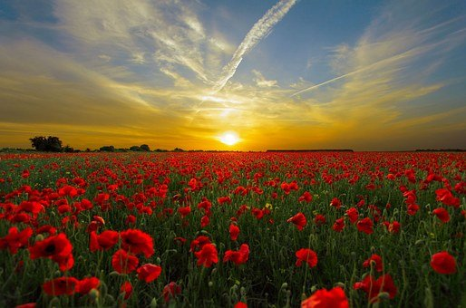 Sunset, Field Poppy, Sun, Nature