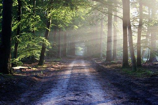 大通り, 木, パス, 太陽光線, 林, 森, 森林, 歩道, 森の小道