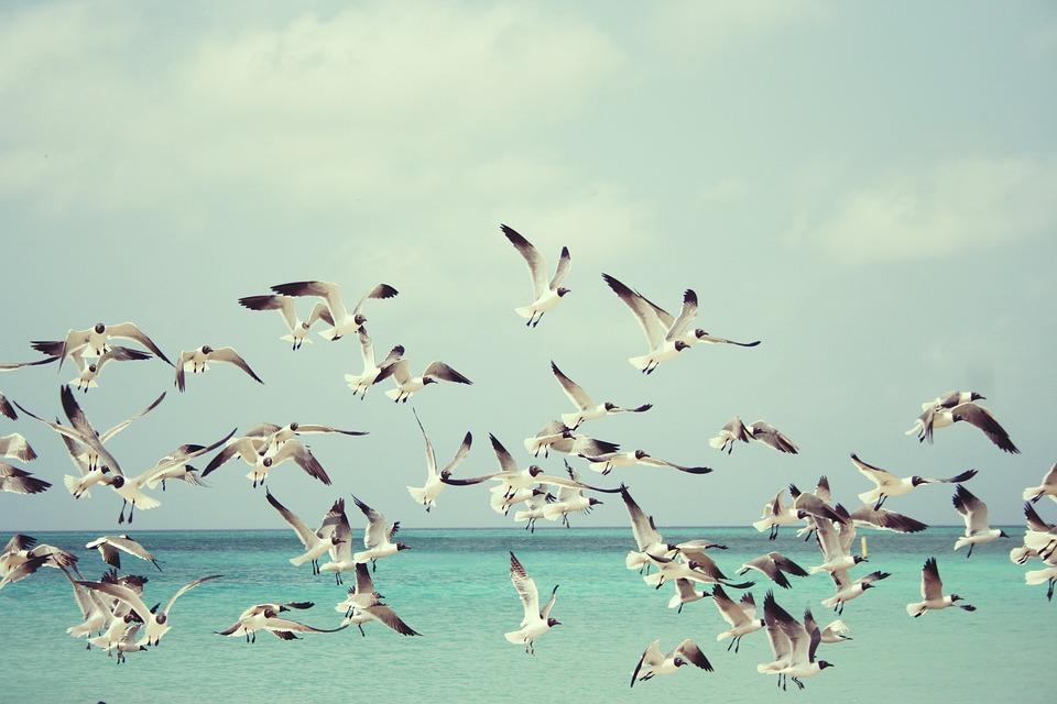 Gabbiani, Beach, Uccelli, Ali, Natura, Mare, Estate