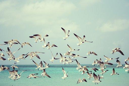 Hải Âu, Bãi Biển, Mòng Biển, Chim, Cánh