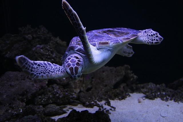 sea turtles turtle 183 free photo on pixabay