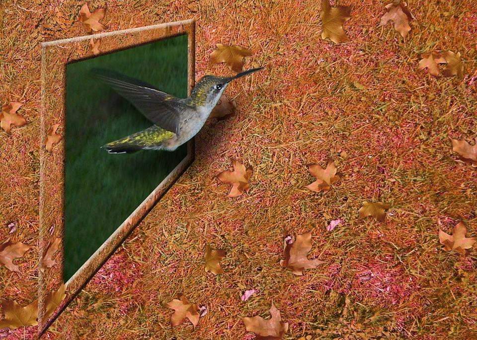 σύριγγες για το πουλί