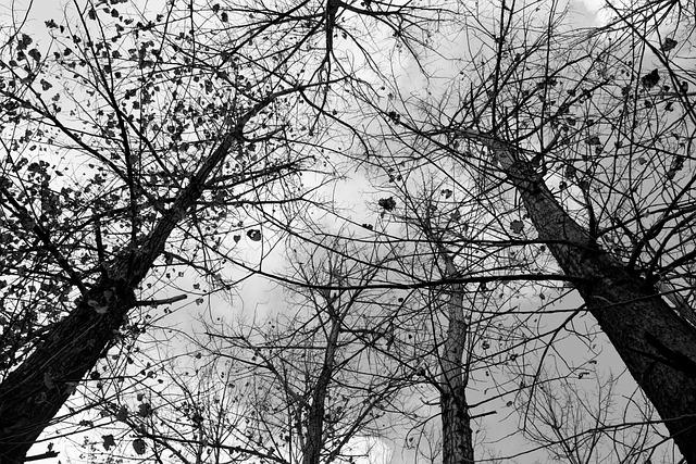 Фон деревьев