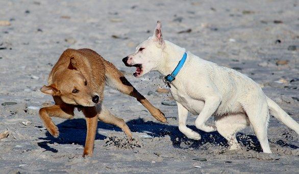 Dogs, Beach, Romp, Play, Fun, Run, Bite, how to train a dog not to bite