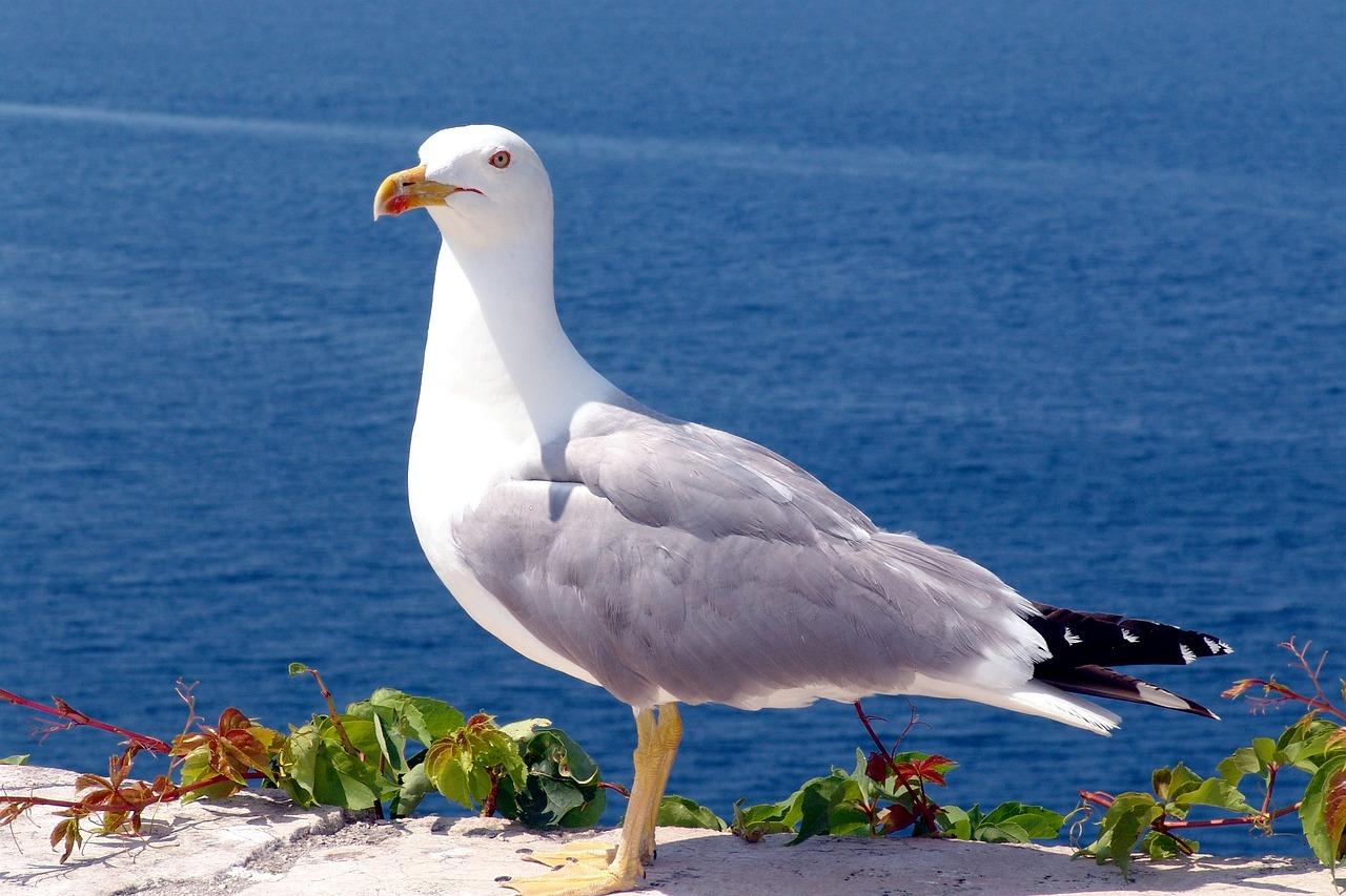 буду углубляться чайка фото птица создала уникальный