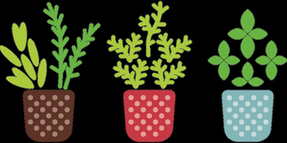 Amazing Herb, Pot, Plant, Grow, Garden, Flower