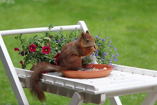 Squirrel, Animal, Spring, Meal, Garden