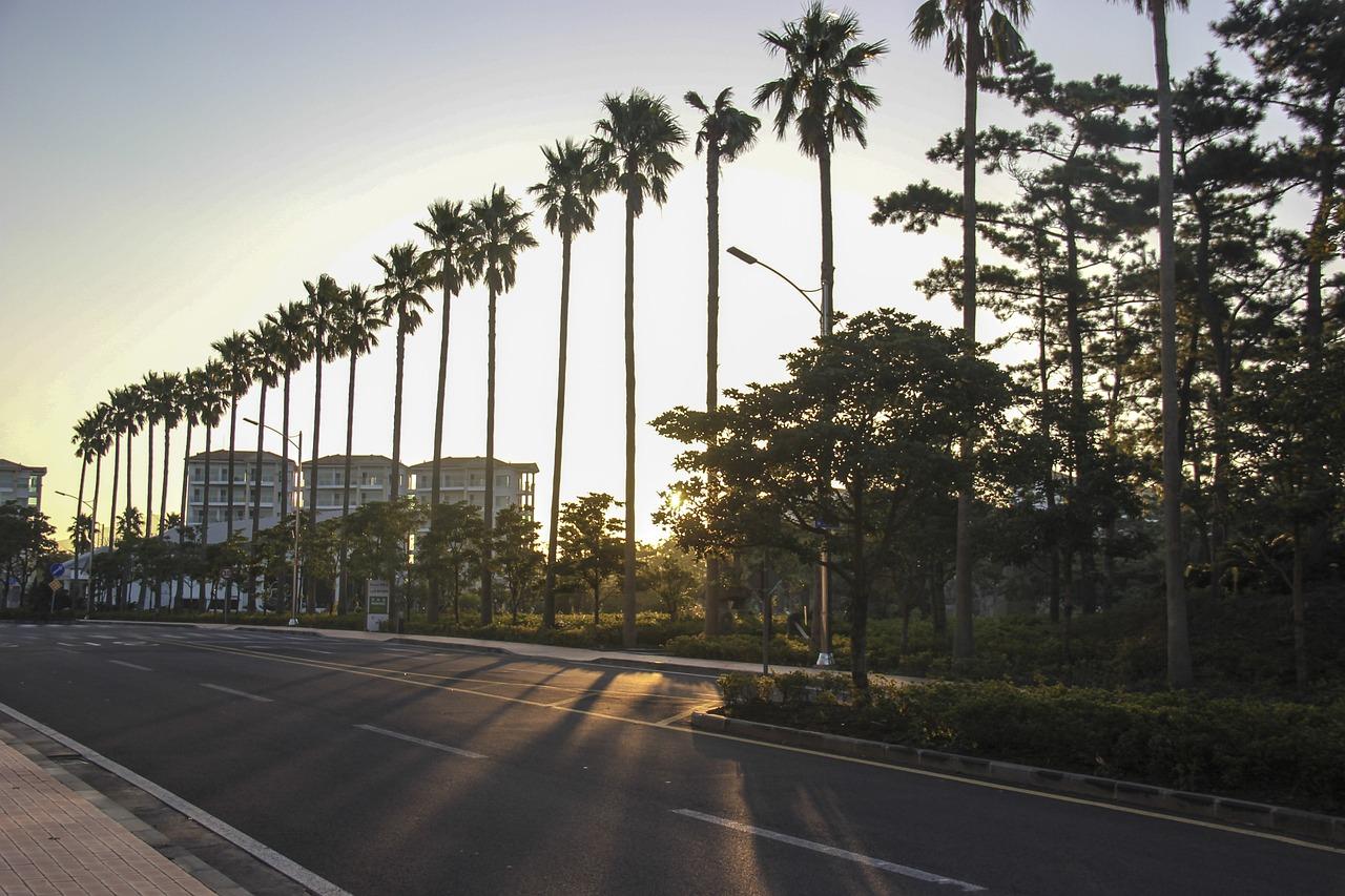 когда фото дорога пальмы очень