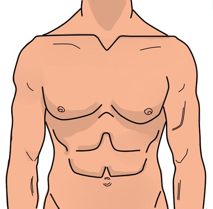 Anatomía Hombre Abdomen · Imagen gratis en Pixabay