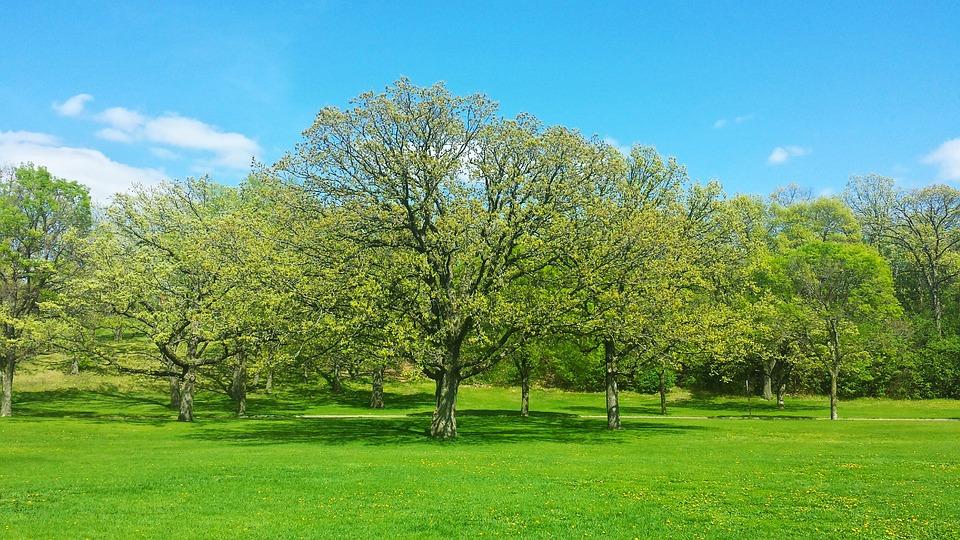 Kết quả hình ảnh cho mùa xuân xanh