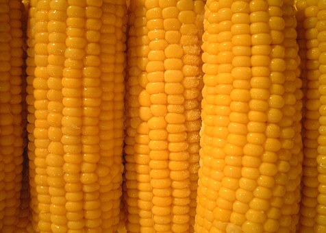 Corn Corn On The Cob Vegetables Corn Corn