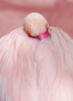 Flamingo, Pink, Bird, Water Bird