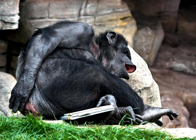 Free photo: Monkey, Laugh, Chimpanse, Cheeky - Free Image ...