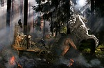 forest fire, bewitched, fantasy