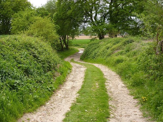 Photo Gratuite Vert Chemin De Terre Winding Road