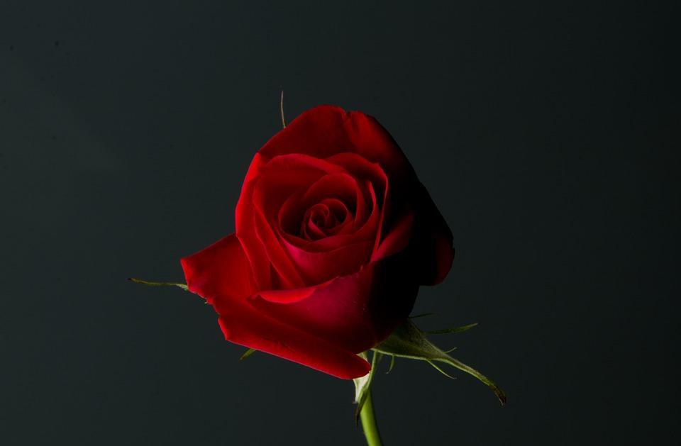 Red flower love