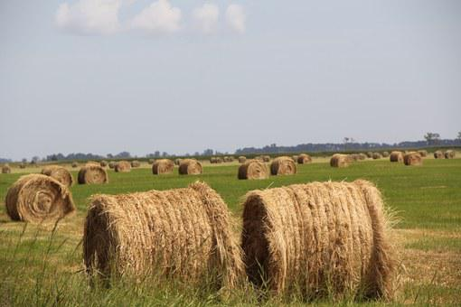 Hay, Field, Agri, Summer, Farm