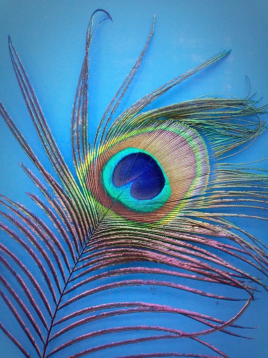 Free photo: Peacock, Feather, Blue, Green - Free Image on Pixabay ...