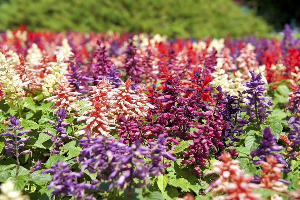 Trädgård blommor : Gratis foto blommor färger natur trädgård bild på