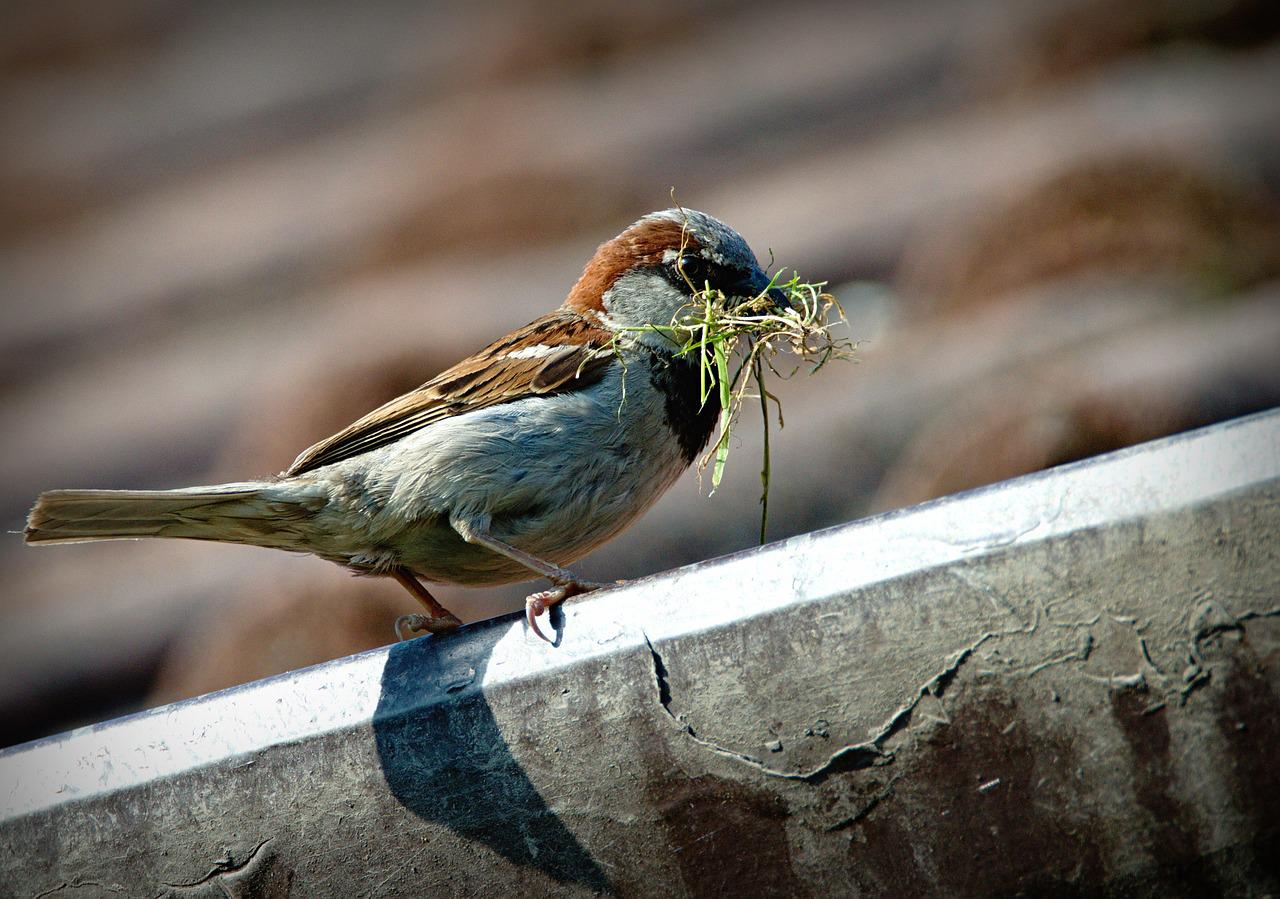 Sparrow Pond Family Campground - Family Fun, Camping, Rv Park Photo of a sparrow