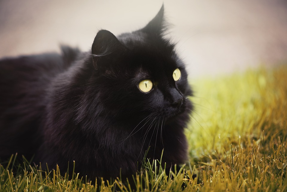 Facebook čierna mačička
