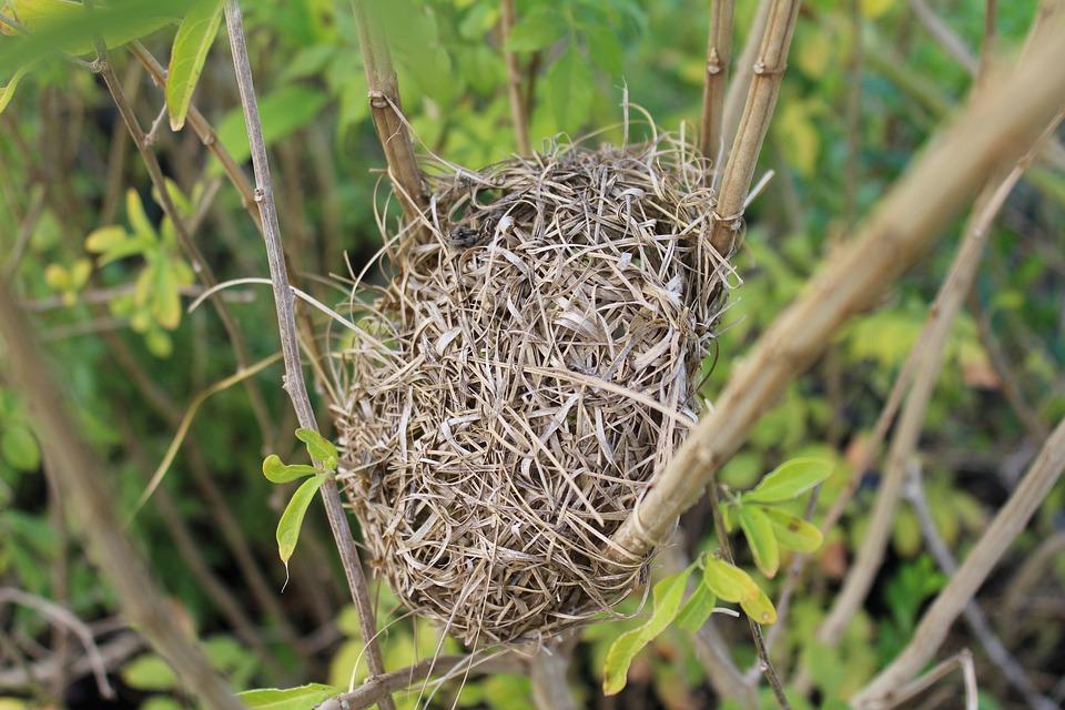 free photo bird nest birds nest branch free image on pixabay 827534. Black Bedroom Furniture Sets. Home Design Ideas