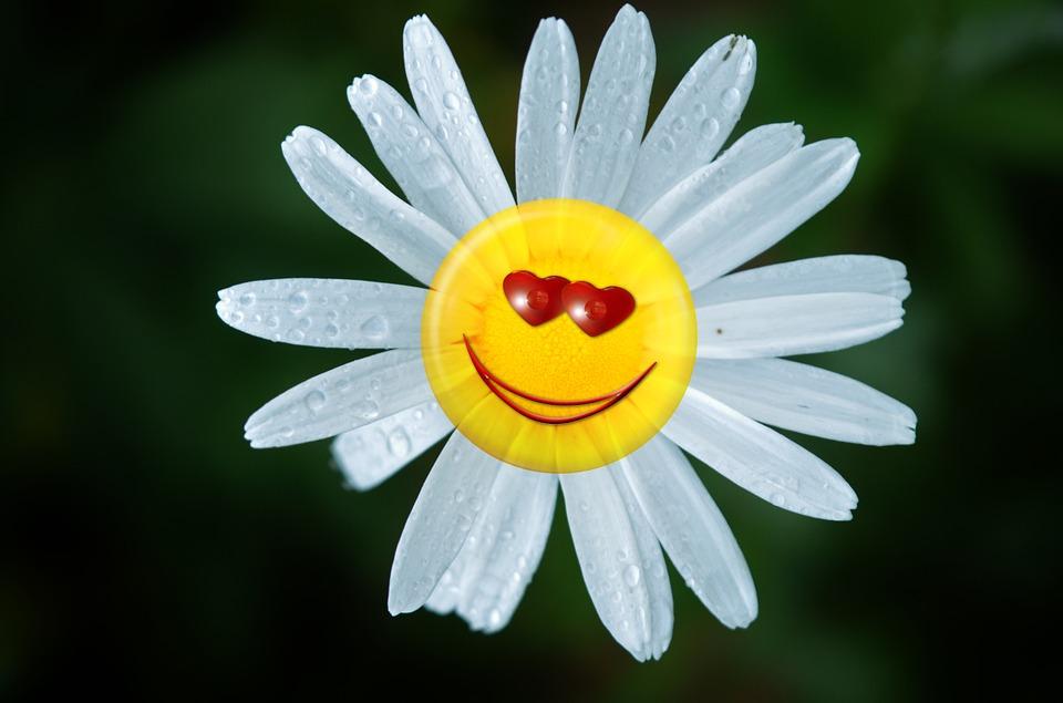 Free Illustration Margarite Flower Emoticon Spring