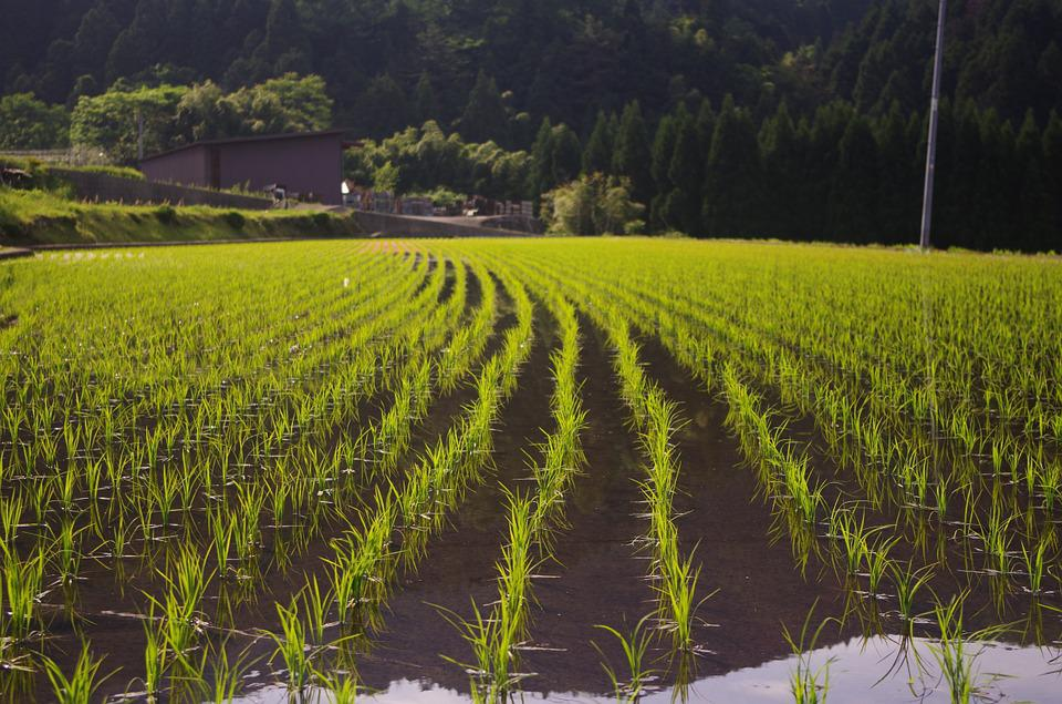 「田植え 写真 フリー」の画像検索結果