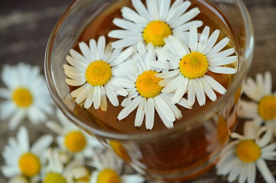 Ромашки, Ромашки Цветы, Лекарственные Травы