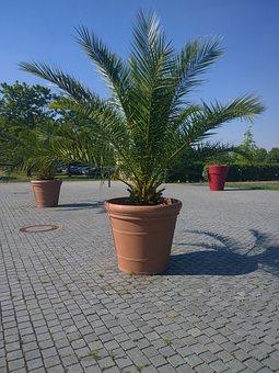 Palm, Plant, Casting, Hesse, City