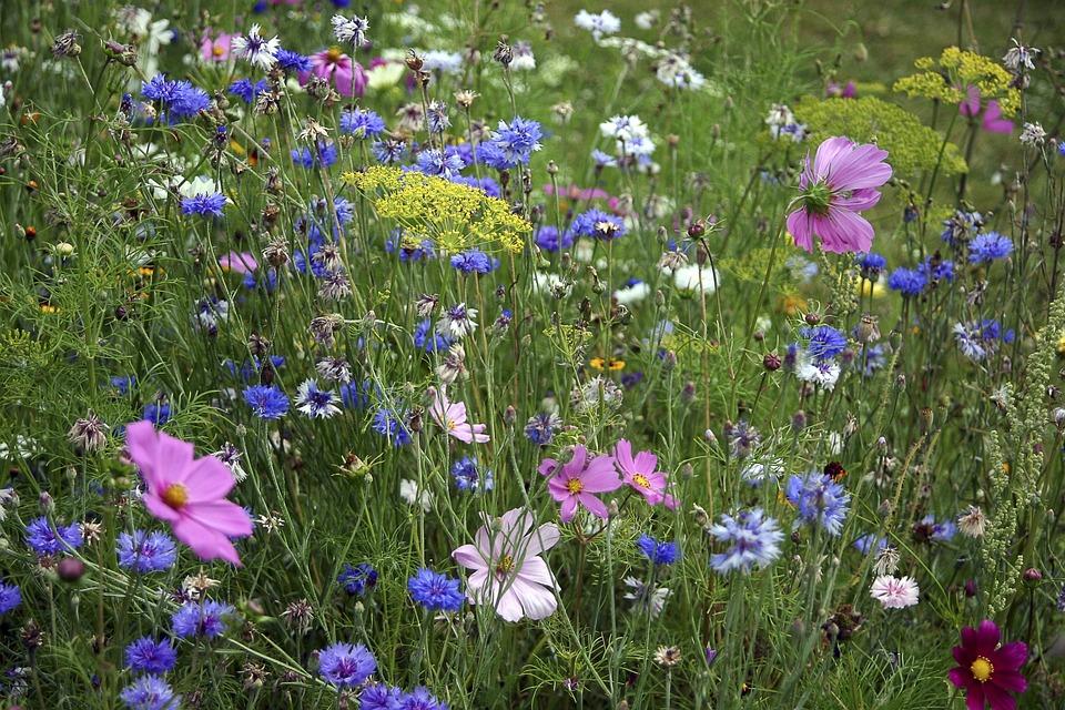 photo gratuite fleurs des champs fleury jachere image gratuite sur pixabay 830388. Black Bedroom Furniture Sets. Home Design Ideas