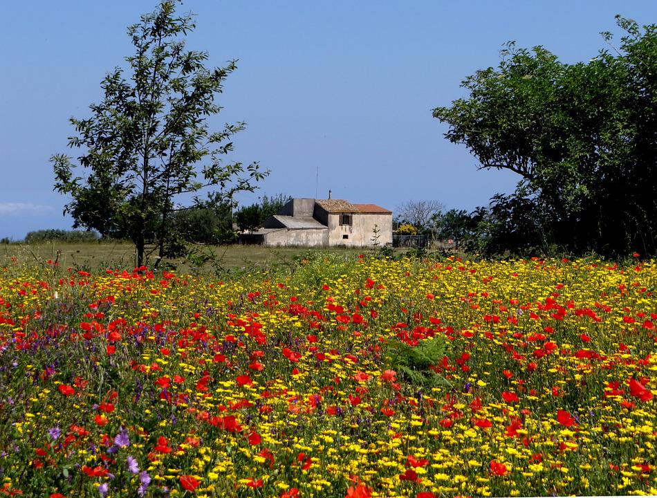 Fiore Di Campo Prato Estate Fiori · Foto gratis su Pixabay