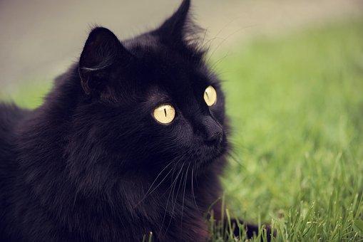 Čierna mačička sex vids