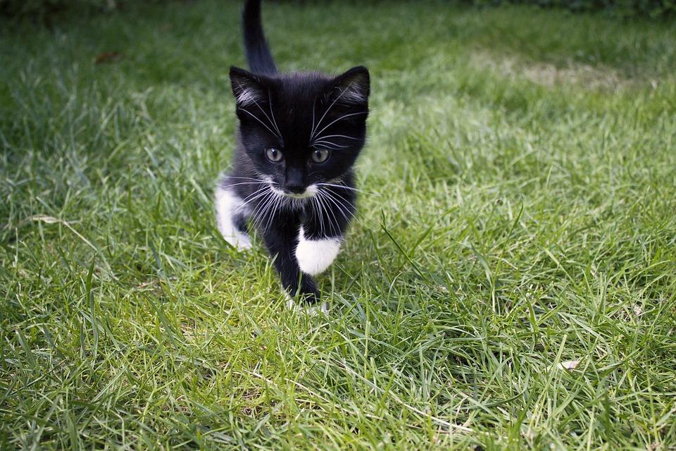 Cat, Maia, Animal, Grass, Pet, Cats, Mammal, Feline