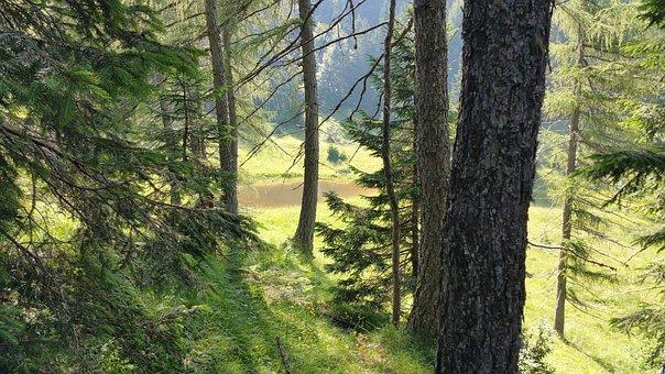 Wood, Mountain, Nature, Montain