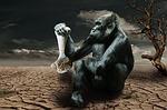 gorilla, hunger