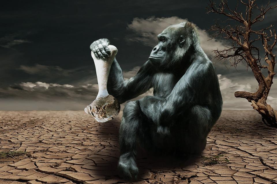 Gorila, Hambre, Conciencia Ambiental, Mono, Animales