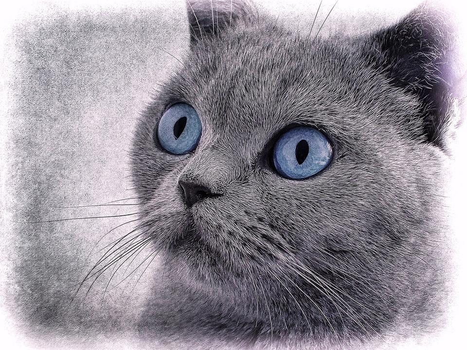 Cat Chat Dessin Oeil Bleu Photo Gratuite Sur Pixabay